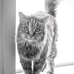 cat-150x150